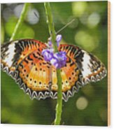 Speckled Butterfly Wood Print