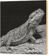 Speckled Iguana Lizard Wood Print