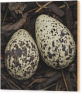 Speckled Killdeer Eggs By Jean Noren Wood Print