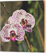 Speckled Orchids Wood Print