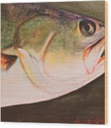 Speckled Trout Wood Print by Amanda Ladner