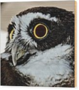 Spectacle Owl Wood Print