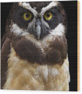 Spectacled Owl Wood Print