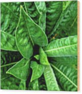 Spectacular Green Foliage Wood Print