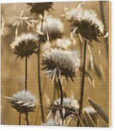 Spent Flowers In The Field Wood Print