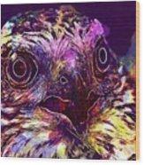 Sperber Raptor Plumage Bird Of Prey  Wood Print