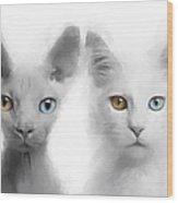 Sphynx And Main Coon Paint No 01 Wood Print