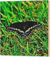 Spicebush Swallow Tail Wood Print