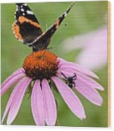 Spider And Butterfly On Cone Flower Wood Print