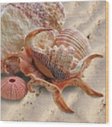 Spider Conch Shell On The Beach Wood Print
