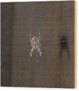 Spider Wood Print