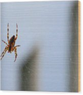 Spider Hello Panorama Wood Print