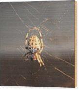 Spider In Wait Wood Print