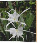 Spider Lilies Wood Print