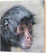 Spider Monkey Face Closeup Wood Print