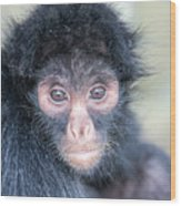Spider Monkey Face Wood Print