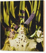 Spider Orchid Wood Print