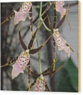 Spider Orchids Wood Print