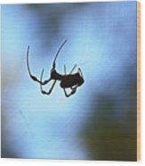 Spider Silhouette Wood Print