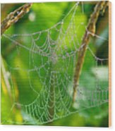 Spider Web Artwork Wood Print