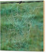 Spider Web In The Springtime Wood Print