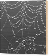 Spider Web Patterns Wood Print