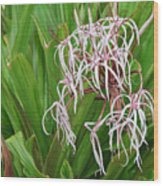 Spider,lily Wood Print