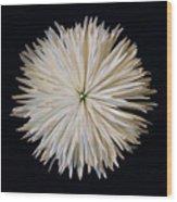 Spidermum11 Wood Print