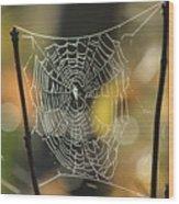 Spider's Creation Wood Print