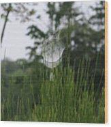 Spider's Net Wood Print