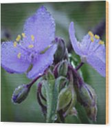 Spiderwort Wood Print by James Barber