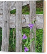 Spiderworts By The Gate Wood Print