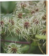 Spidery Flowers Wood Print