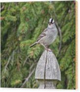 Spiffy Sparrow Wood Print