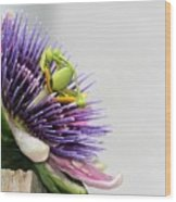 Spikey Passion Flower Wood Print