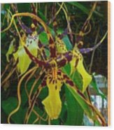 Spindly Orchid Wood Print