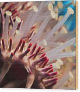 Spines Of A Crown Of Thorns Starfish Wood Print