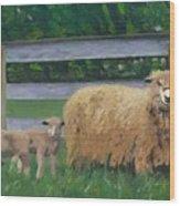 Sping Lambs Wood Print