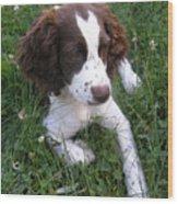 Spinger Spaniel Pup Wood Print