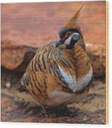 Spinifex Pigeon Wood Print