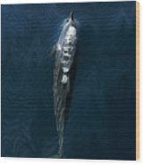 Spinner Dolphin Wood Print