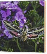 Spinx Moth Wood Print