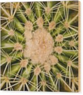 Spiny Cactus Needles Wood Print