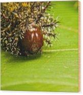 Spiny Larvae Wood Print