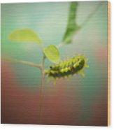 Spiny Oak Slug Moth 4 Wood Print