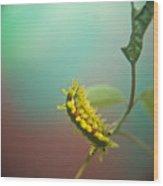 Spiny Oak Slug Moth 5 Wood Print