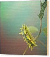Spiny Oak Slug Moth 7 Wood Print