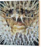Spiny Puffer Wood Print