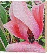 Spiral Pink Tulips Wood Print