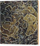 Spirals In Corals Wood Print